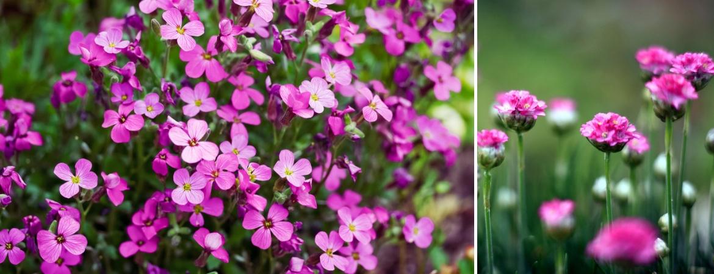 Alpines_Frosts Garden Centres