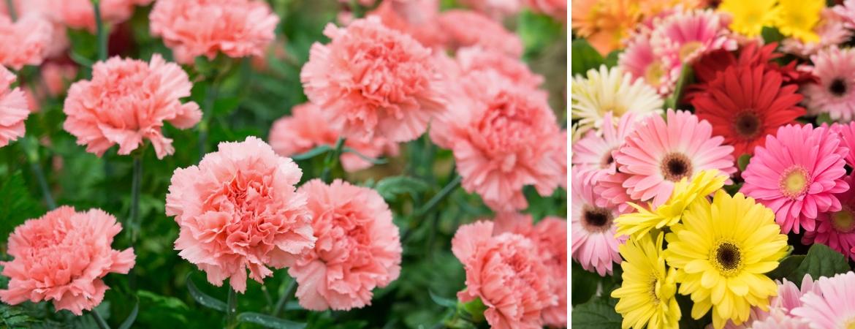 Annuals_Frost Garden Centres