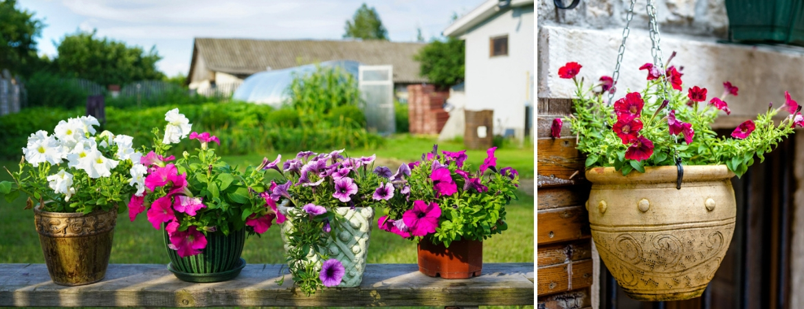 Frosts Garden Centres & Plant containers - Frosts Garden Centres - Better living living ...
