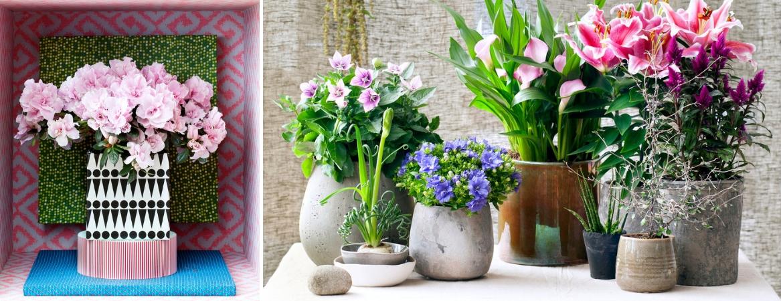 Flowering houseplants_Frosts Garden Centres