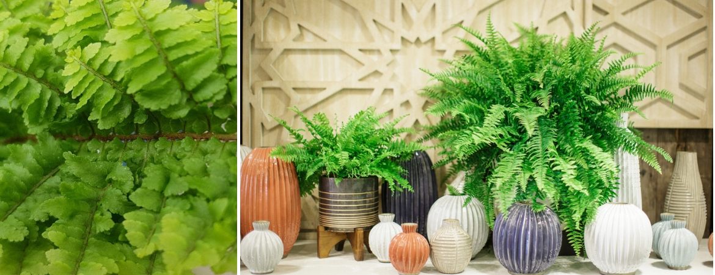 Houseplants_Frost Garden Centres