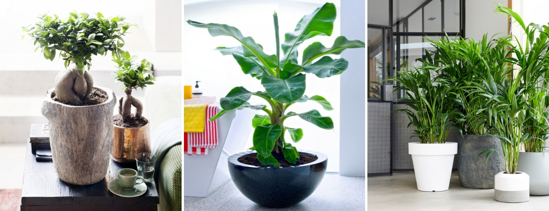 Indoor plants_Frost Garden Centre
