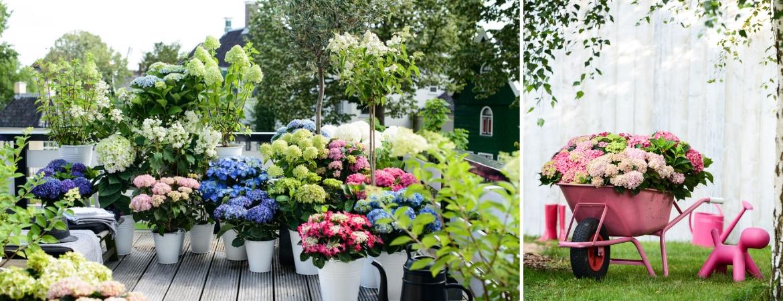 Outdoor plants_Frosts Garden Centres