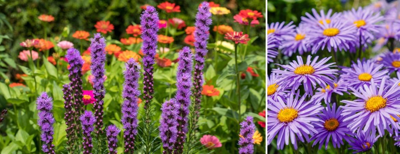 Perennials_Frosts Garden Centres