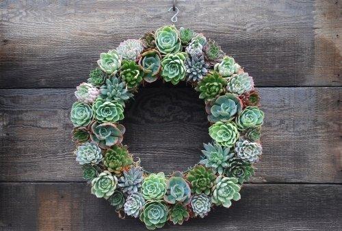Diy Ideas Make Your Own Succulent Wreath Frosts Garden