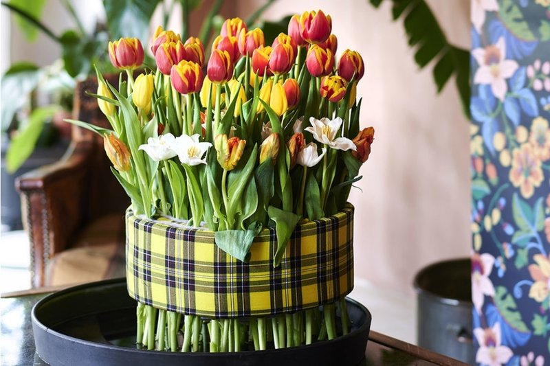 Flower of the month: Tulip