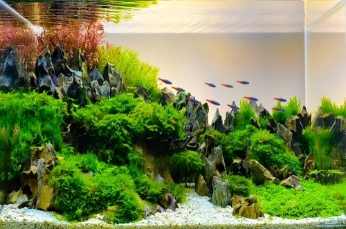 How to aquascape? - Frosts Garden Centres