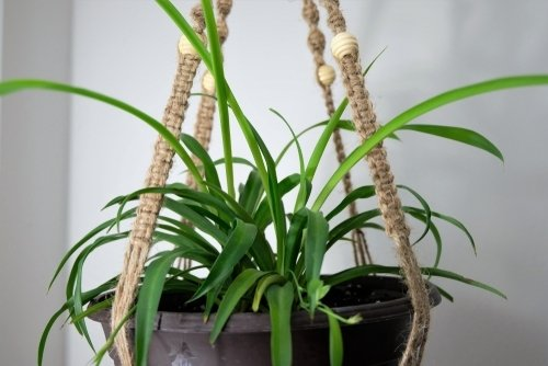 Top 8 plants for small indoor and outdoor spaces